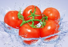 Tomatoes in water Royalty Free Stock Image
