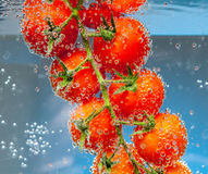 Tomatoes in the water with air bubbles Stock Photos