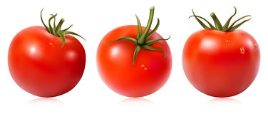 Tomatoes with water drops. Royalty Free Stock Images