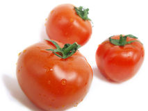 Tomatoes with water drops Royalty Free Stock Photos