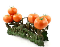 Tomatoes on weight. The picture presents from tomatoes weight Stock Image
