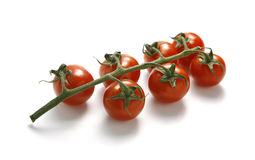 Tomatoes on white Royalty Free Stock Images