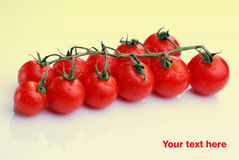 Tomatoes in white background Stock Photos