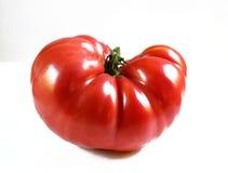 Tomatoes on white background Royalty Free Stock Photo