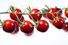 Tomatoes with a white background Royalty Free Stock Photos
