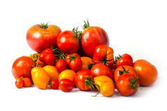 Tomatoes on a white background Stock Image