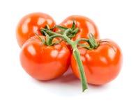 Tomatoes on white background. Juicy ripe tomatoes on white isolated background Stock Photos