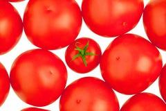 Tomatoes. White background. Royalty Free Stock Photos