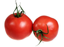 Tomatoes on a white background Stock Images