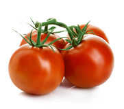 Tomatoes  on white. Royalty Free Stock Photography