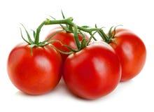 Tomatoes  on white. Royalty Free Stock Photo