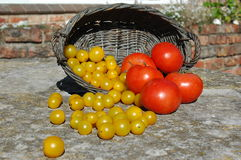Basket of ripe tomatoes Royalty Free Stock Photography