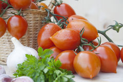 Tomatoes in a wicker basket. Bunch of tomatoes in a wicker basket with garlic parsley Royalty Free Stock Photography