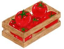Watercolor Tomato vector illustration