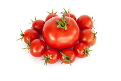 Tomatoes on a withe background Stock Image