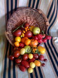 Tomatoes in wooden basket 2. Various types of colorful tomatoes in wooden basket and old rug Royalty Free Stock Images