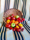 Tomatoes in wooden baslet 6. Various types of colorful tomatoes in wooden basket and old rug Royalty Free Stock Photo