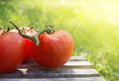Tomatoes on wooden box in garden Stock Images