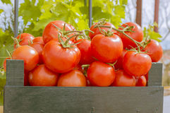 Tomatoes. Wooden box with red tomatoes Stock Photos