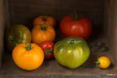 Tomatoes in a wooden box Stock Photography