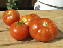 Tomatoes on a wooden table Royalty Free Stock Photos