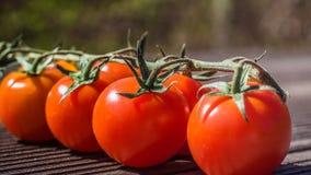 Tomatoo 免版税图库摄影