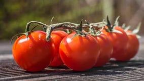 Tomatoo 免版税库存图片
