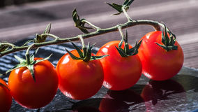 Tomatoo. Red tomatoos in the sunny day Royalty Free Stock Photo
