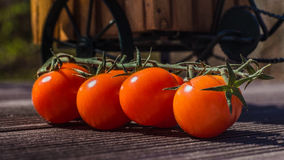 Tomatoo. Red tomatoos on the table stock photo