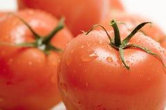 Free Tomatos Stock Photos - 1041423