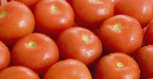 Tomatos. Fresh Tomatos Stock Images