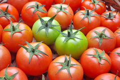 Tomatos Stock Images