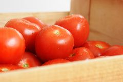 Tomatos. In a wooden crate Royalty Free Stock Photography