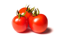 Free Tomatos Royalty Free Stock Photos - 20788058