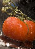 Tomatos. Tomato - is a cultivated plant. It is commonly cultivated because of its juicy fruits, which are full of vitamins, nutritions and mineral salts Stock Photos