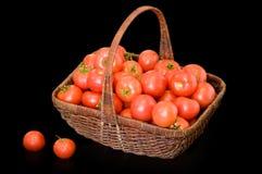Free Tomatos Royalty Free Stock Images - 9858029