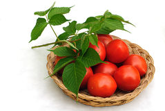 Tomatos And Basket Royalty Free Stock Photo