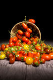 Tomatos on basket Royalty Free Stock Photos