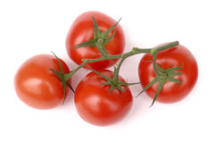Tomatos on branch isolated on white. Four tomatos on branch isolated on white Stock Photography