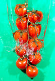 Tomatos branch in water splason a green background Royalty Free Stock Photos