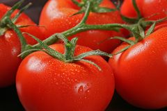Tomatos in bunch. Posed on kitchen table covered with water droplet Stock Image