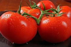 Tomatos in bunch. Posed on kitchen table covered with water droplet Royalty Free Stock Images