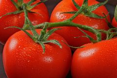 Tomatos in bunch. Posed on kitchen table covered with water droplet Royalty Free Stock Photos