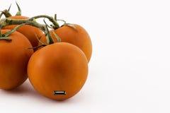 Tomatos and evolution Stock Photos