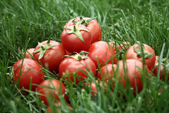 Tomatos on grass Stock Photo