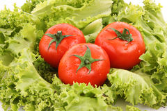 Tomatos on green stock images