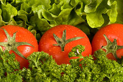 Tomatos on the green verdure background. Fresh red tomatos with drops of water on verdure background composing of salad and parseley Royalty Free Stock Image
