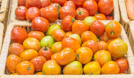 tomatos harvested products on wooden basket Stock Photography