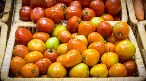 tomatos harvested products on wooden basket Royalty Free Stock Photos