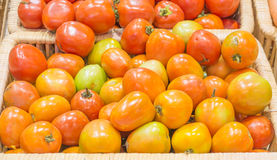 tomatos harvested products on wooden basket Royalty Free Stock Image